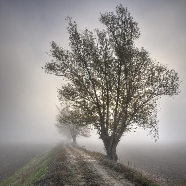 Foggy Morning - Sozzigalli, Soliera, Modena, Italy - November 18, 2011