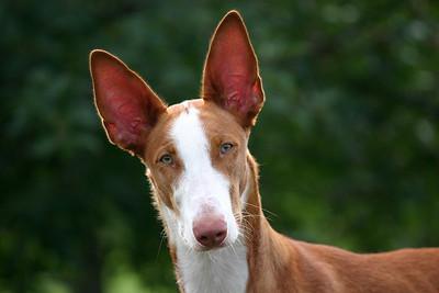 Featured Dog Photos