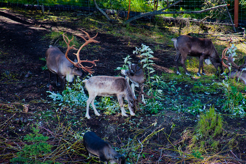 Hike through Denali National Park 1: Journey into Alaska