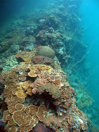 Nikko Bay (PICRC Monitoring Site) - 6/5/11