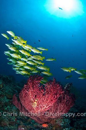 Maldives Diving April 2011