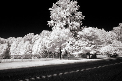 infra red pictures