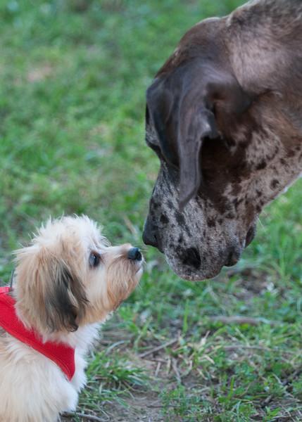 Deep Run Hunt Club DOG SHOW 6-16-2012