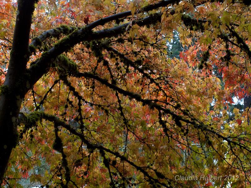 Oregon_Oct_2011-8-4.jpg
