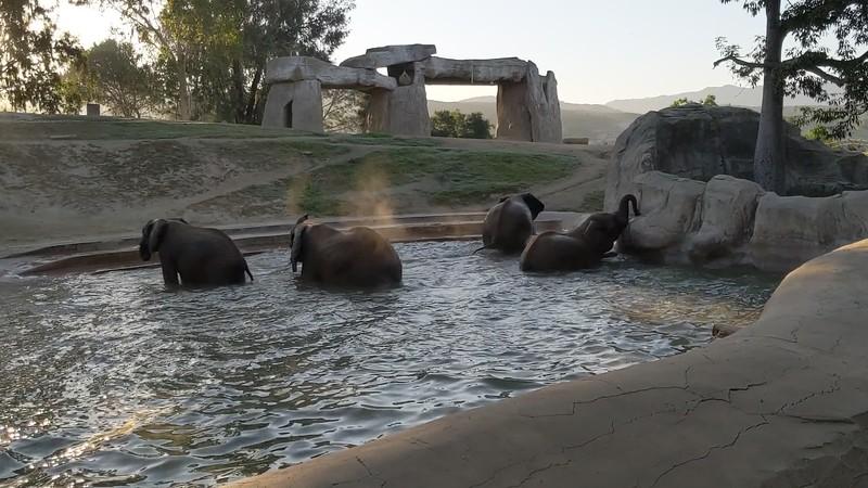 Elephants at play.