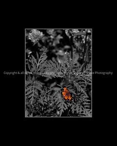 015-butterfly-wdsm-02jul13-16x20-bbp-201-1948