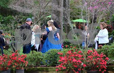 3/22/15 Azalea & Spring Flower Trail 2015 - Ribbon-Cutting Ceremony & Azalea Belles by Jim Bauer