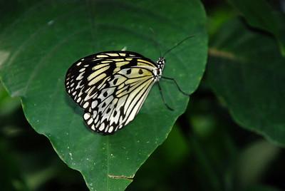2013 07 11:  Colorado, Butterfly Pavillion