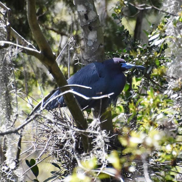 Audubon Swamp Garden, Charleston, SC