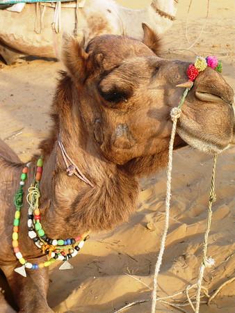 Pushkar, India - March 2009