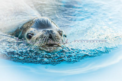 NY Aquarium Mashmeet