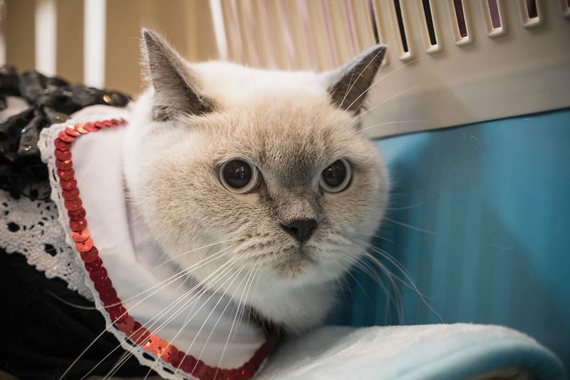 VividSnaps-The-Seletar-Mall-CAT-Dress-Up-Contest-106.jpg