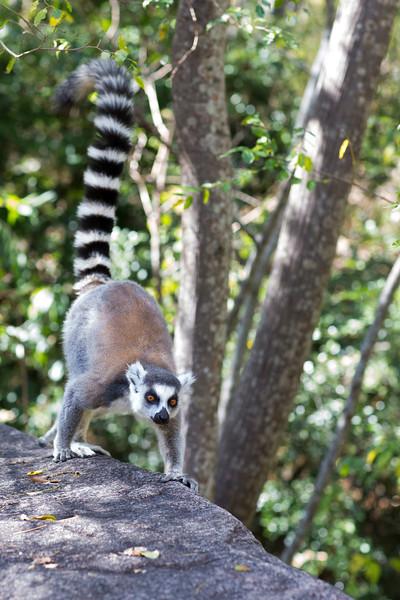 Madagascar_2013_IG3A3247.jpg
