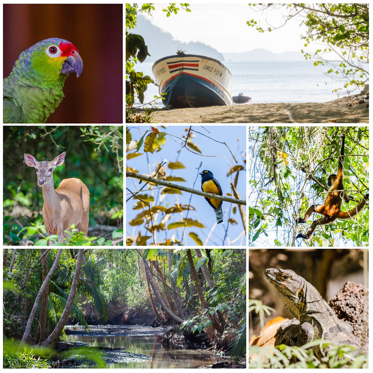 Curu Wildlife Refuge - Costa Rica Cruise