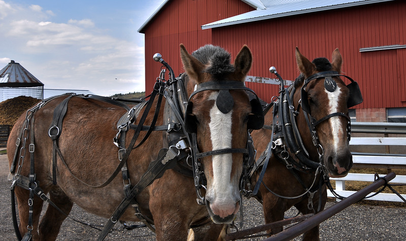 HORSE EYE FULL.jpg