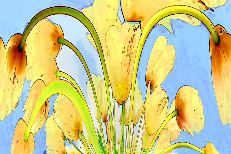 View from the ground of white tulips. Abstract photograph painting artwork photography photo photographs Abstract photograph painting artwork photography photo photographs.