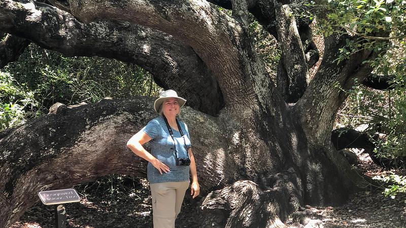 Sandra standing in front of a huge oak tree