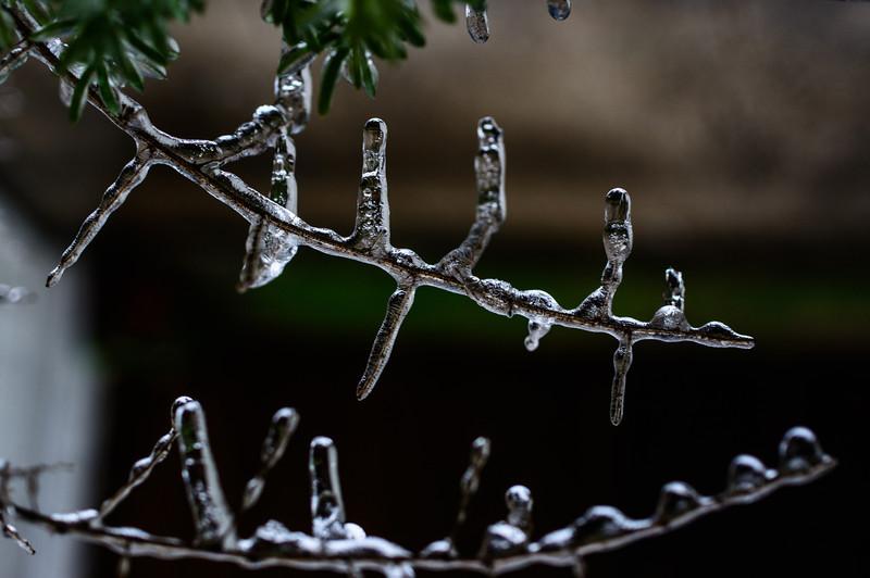 Frozen-2558.jpg