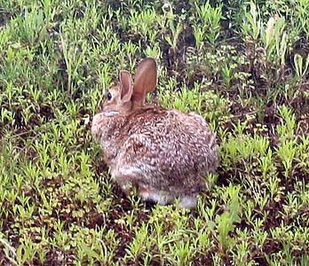 Residential Rabbits