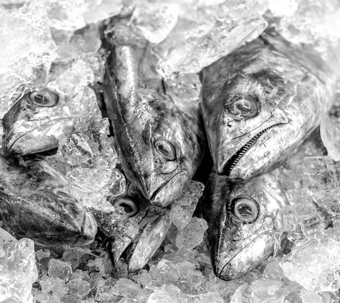 Sea Food Market 3