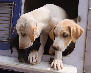 Bev Stevens Puppies #2