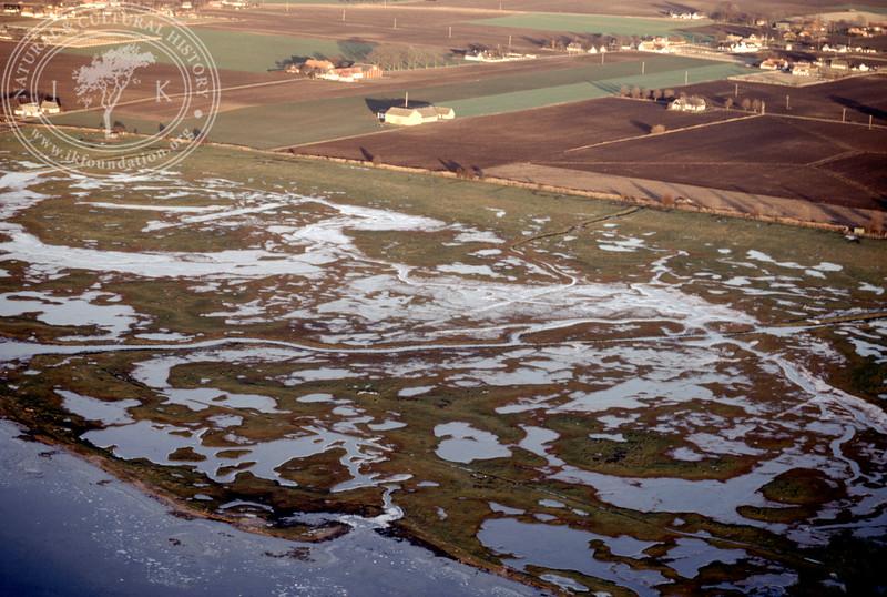 Salt marsh landscape in the southern part of the Öresund, between Hammarsnäs to Tygelsjö meadows in Southwest Skåne (12 December, 1987). | LH.0151