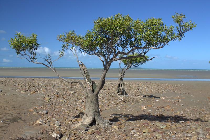 Queensland_0232.jpg