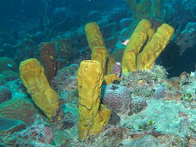 Dive/Couples Negril/Negril/Jamaica - July, 2008
