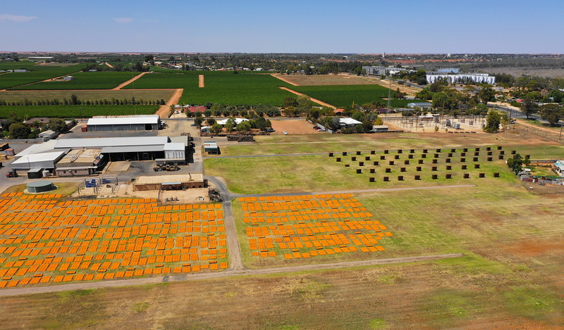 Drying Apricots at Angas Park, Loxton