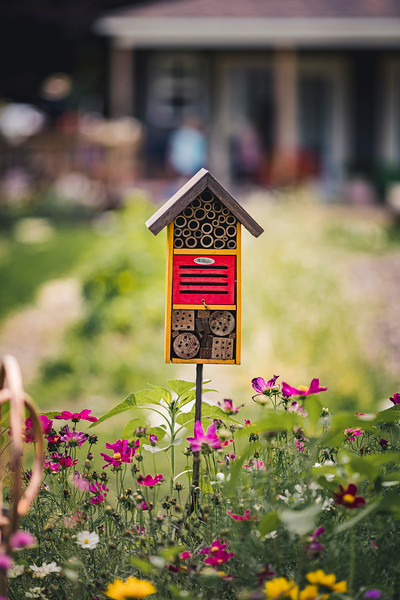 Downers Grove IL // Nature Photography // Honey Bee Gardens Family Farm