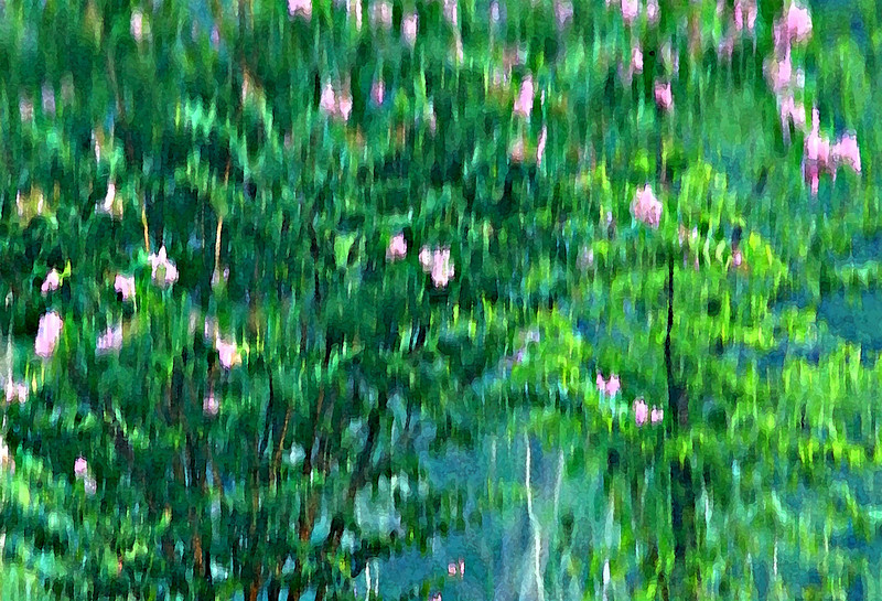 Reflections of a crepe mrytle tree on a lake, with Photoshop effects applied.