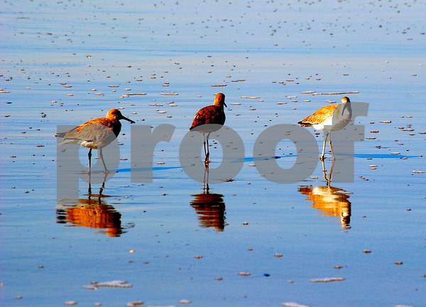 Mirror Trio