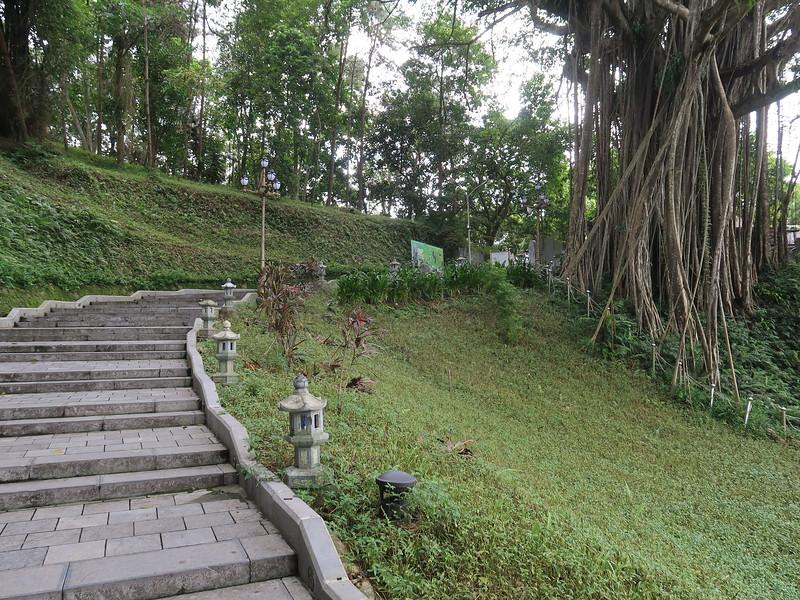 IMG_4445-walk-to-tree.JPG
