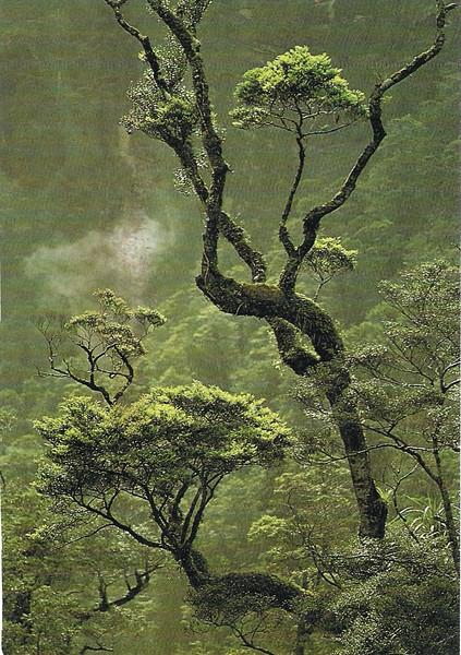 NZ Beech Forest.jpg