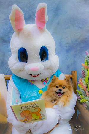 Paws on Main Easter 2021