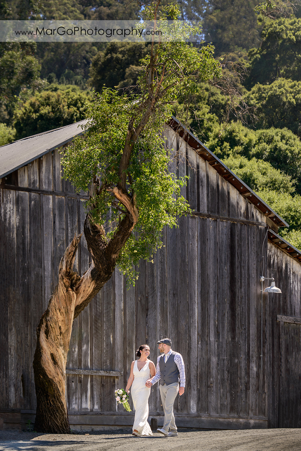 bride & groom walking at Picchetti Winery in Cupertino