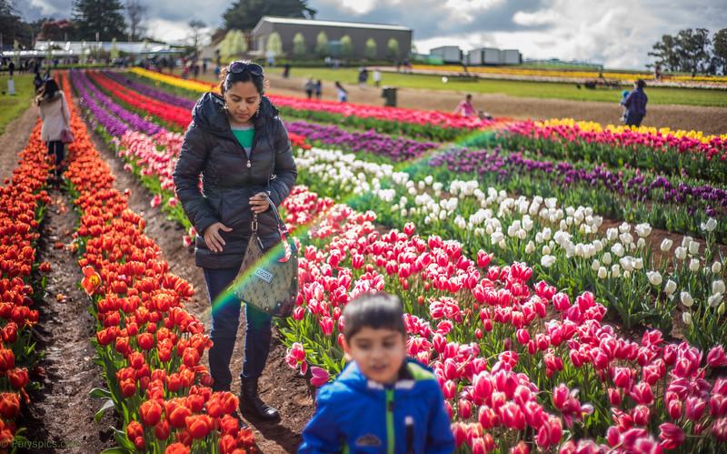 Tesselaar Tulip Festival Silvan Vic Au