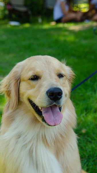 PuppyParty18-415.jpg