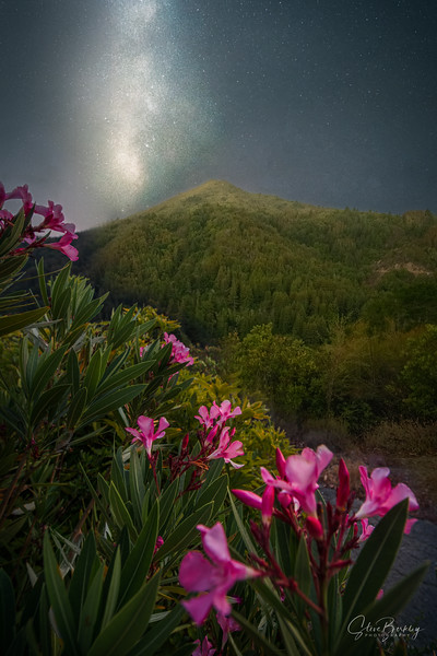 Rhododendrons and Stars