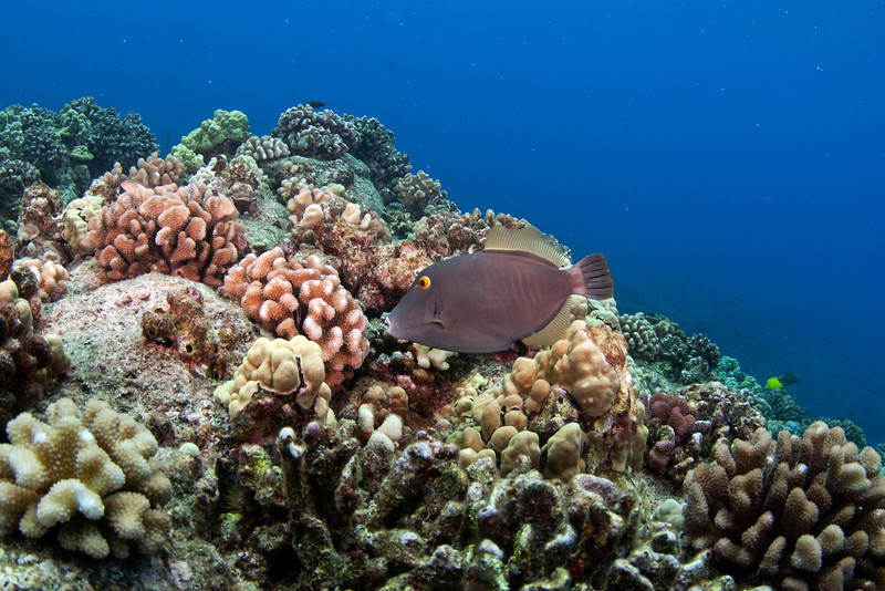 File Fish and Coral Garden.jpg
