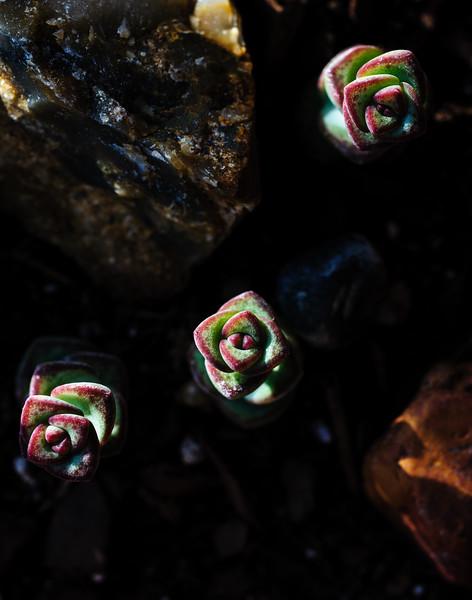 cactus-5459.jpg