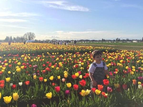 Wooden Shoe Tulip Festival 2015