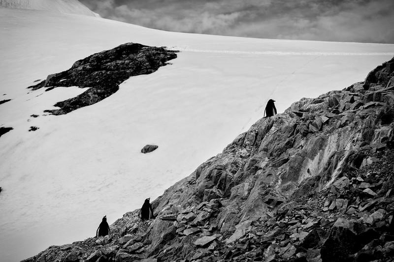_MG_5618_20170120_Antarctica-Edit.jpg