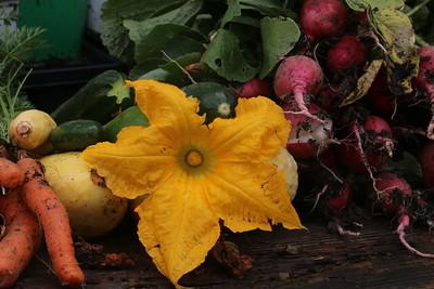 052017 First Harvest