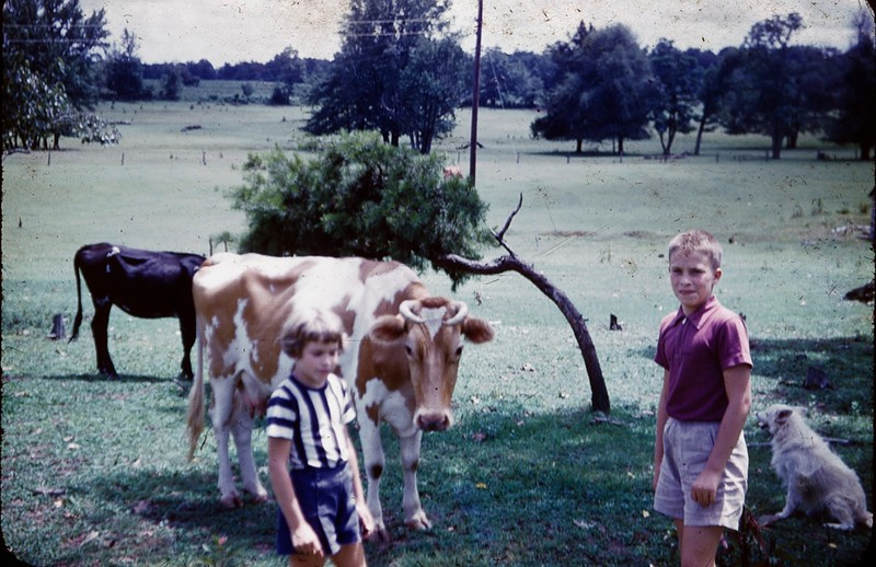 1952 08 Phil and Nancy with cow 2.jpg