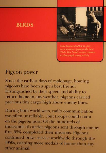 Pigeon Power in espionage