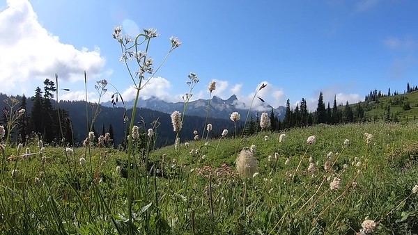 Wildflowers and  Marmots Video