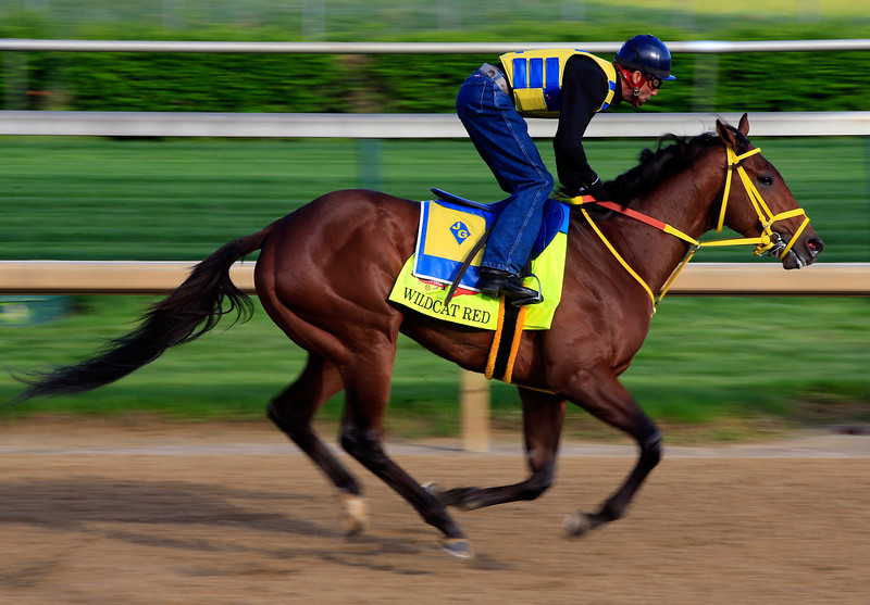 . Kentucky Derby contender Wildcat Red works out on the track during early morning workouts at Churchill Downs on May 1, 2014 in Louisville, Kentucky.  (Photo by Jamie Squire/Getty Images)