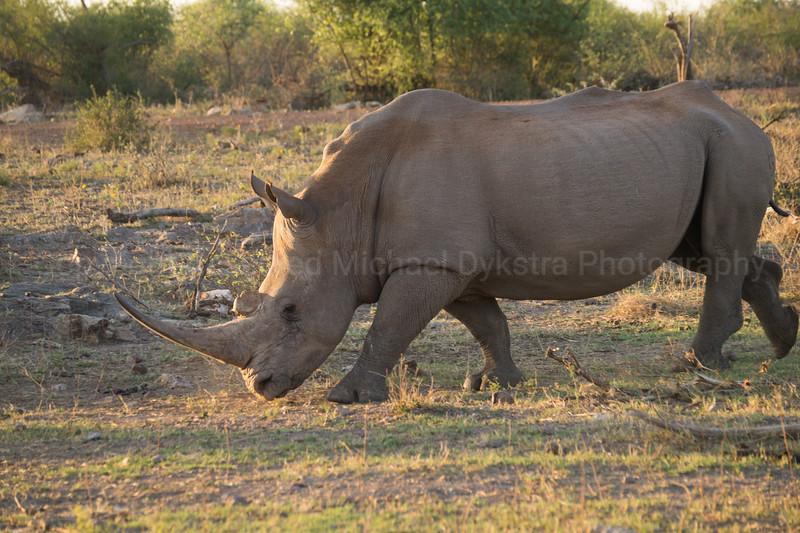 Madikwe-80.jpg