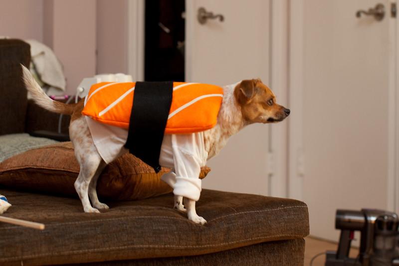 Dog-sushi-halloween-20.jpg